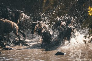 the great migration, Tanzania, The Serengeti National Park, safari, morning game drive, travel blog, tanzania photographer, wildlife photography, east africa, sharyn hodges