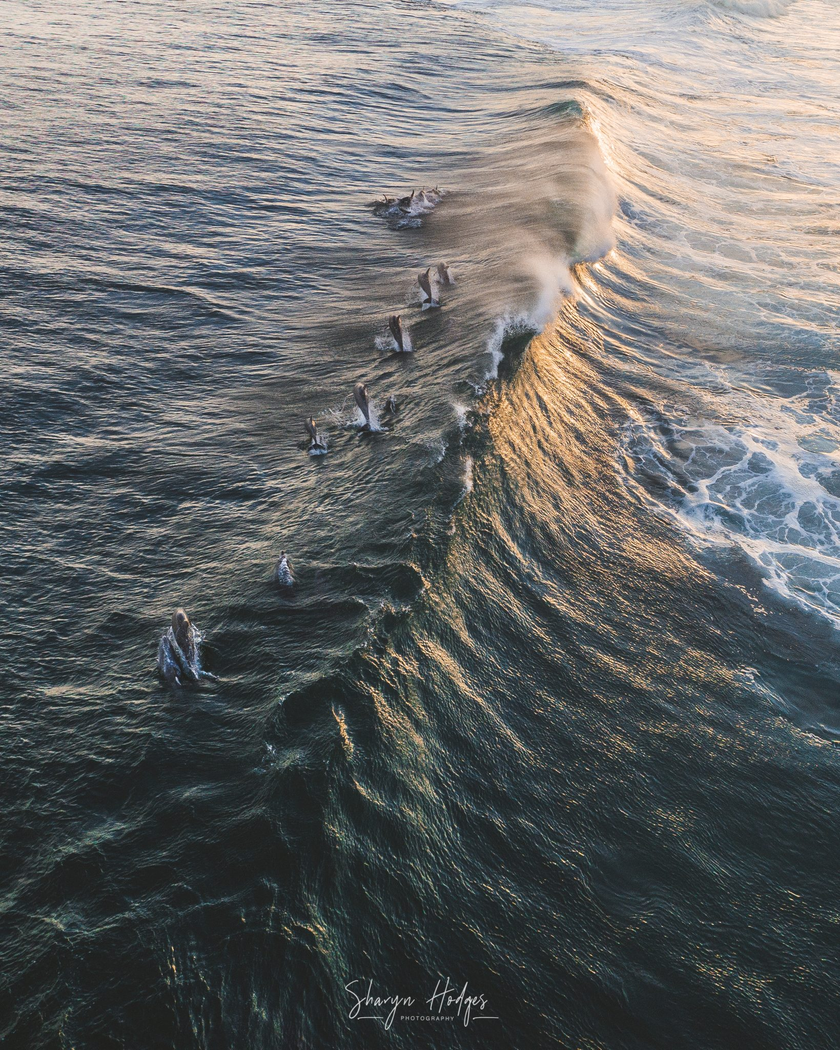 Nine Bottle Nose Dolphins breaking a waves during sunset at Keurboomstrand, Plettenberg Bay