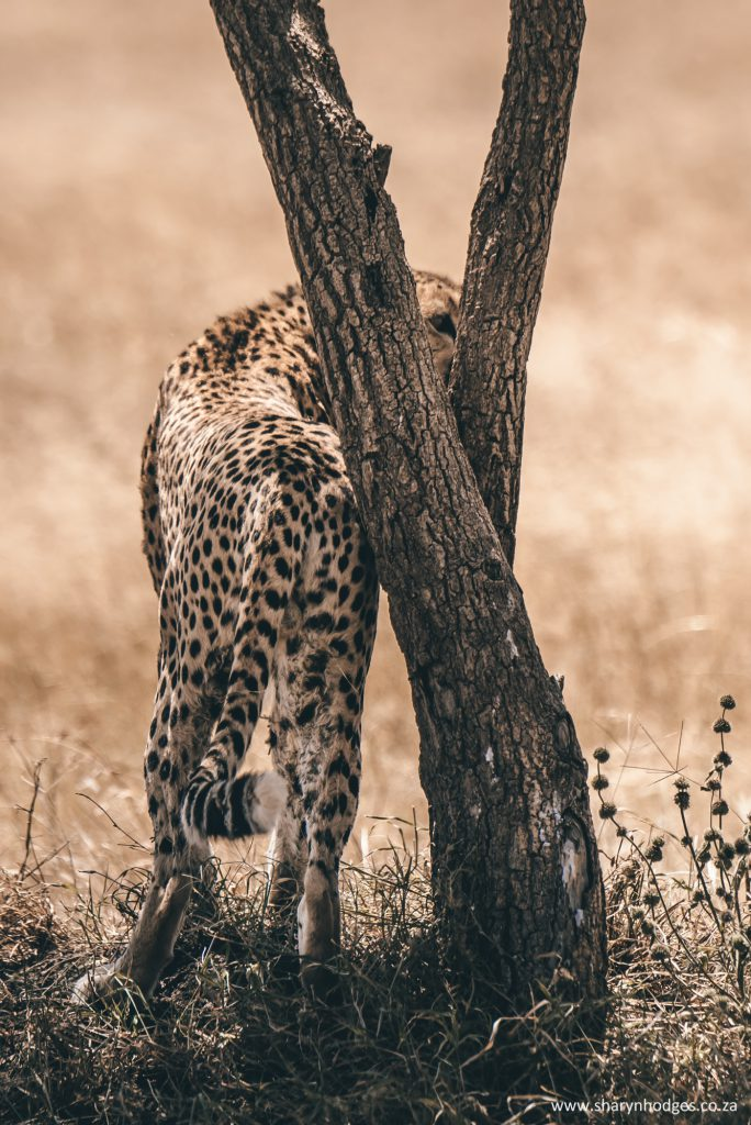 Tanzania, the Serengeti National park, travel blog, safari, safari photography, sharyn hodges