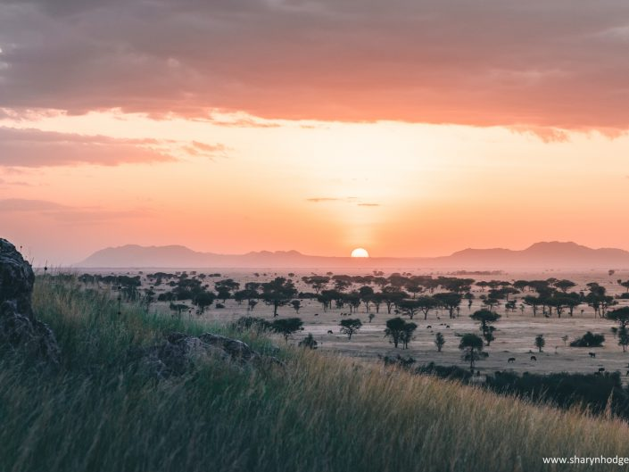 sunset, Tanzania, The Serengeti National Park, safari, morning game drive, travel blog, tanzania photographer, wildlife photography, east africa, sharyn hodges