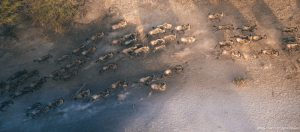 international photographer, the great migration, wildebeest, tanzania, sharyn hodges, tanzania photography