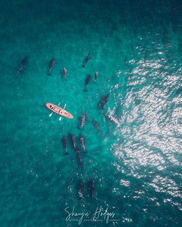 Kayaking With Dolphins In Plettenberg Bay, The Garden Route